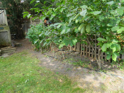 High Park Toronto Back Yard Fall Cleanup After by Paul Jung Gardening Services--a Toronto Organic Gardener