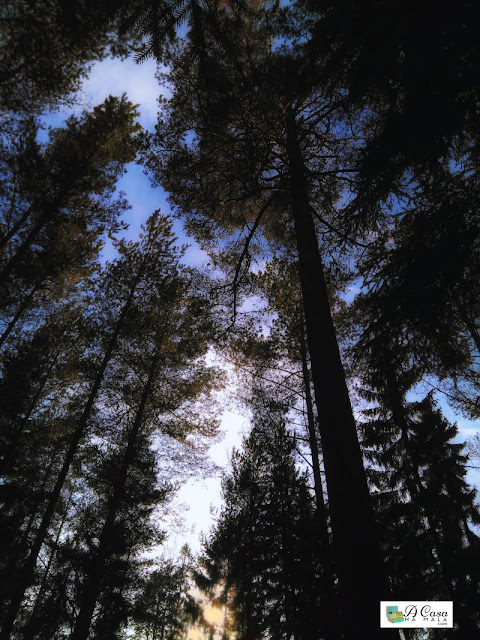 banho de floresta shinrin-yoku