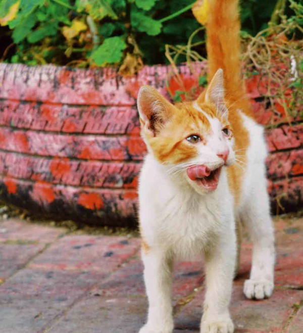 cats of tangier