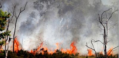 forest fire alipurduar,India