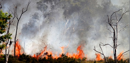 JALDAPARA FOREST FIRE IN INDIA, First Amazon then australia and Now Jalddapara forest fire India, Alipurduar