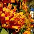 flores encantadas