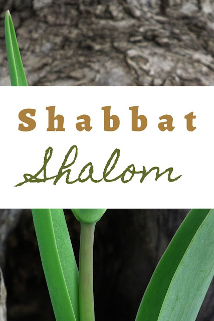 Shabbat Shalom Card Messages | Pretty Greeting Cards | 10 Unique Picture Images