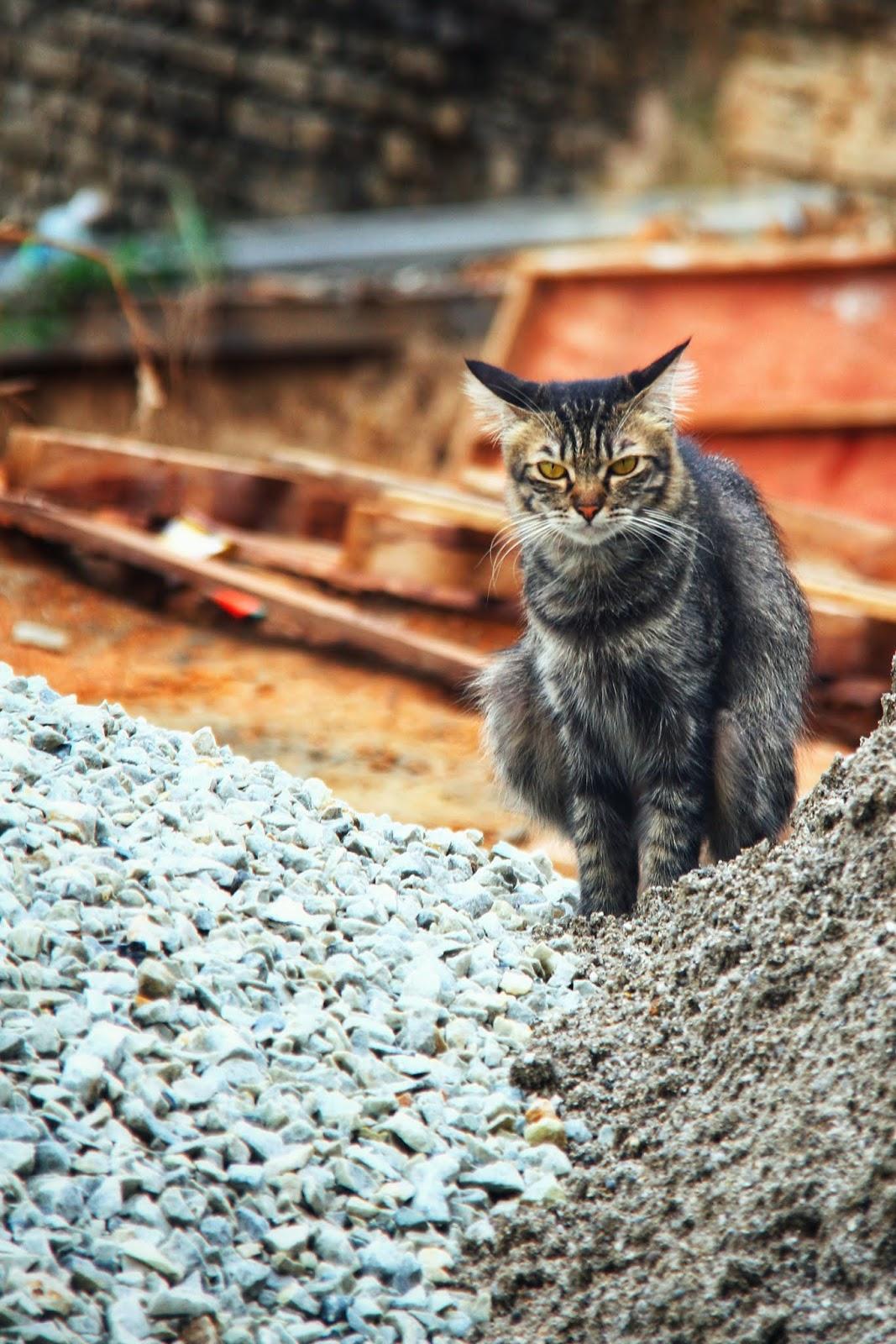 20 Koleksi Gambar Kucing Comel Bernama Tambi 21