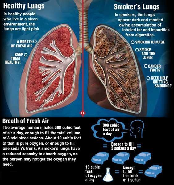 Image Gallery harmful effects of smoking