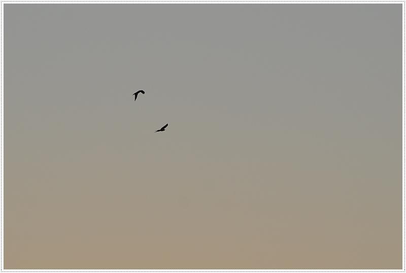 Oiseau Brume Campagne Puisaye Yonne