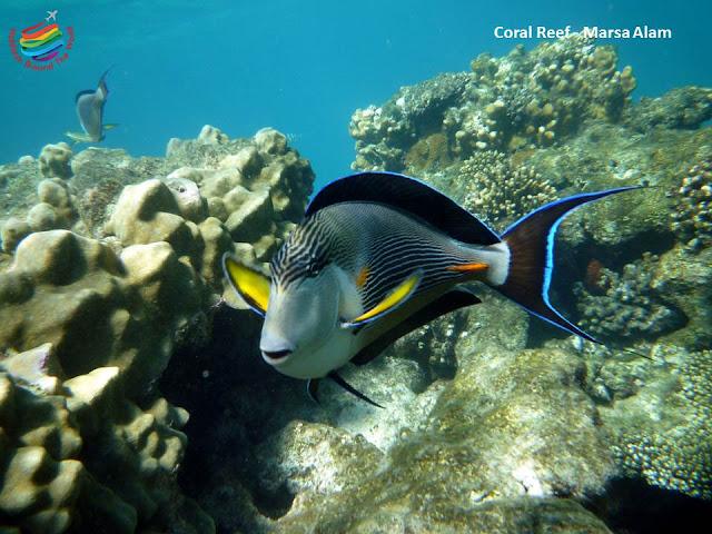 Diving - Marsa Alam