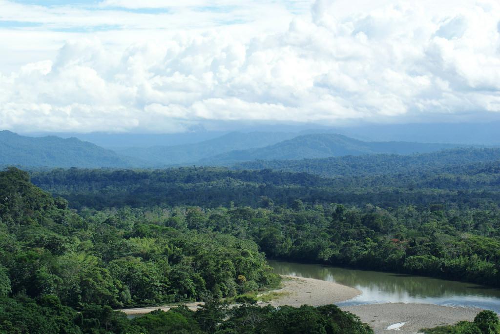 Fakta Menarik Seputar Hutan Amazon