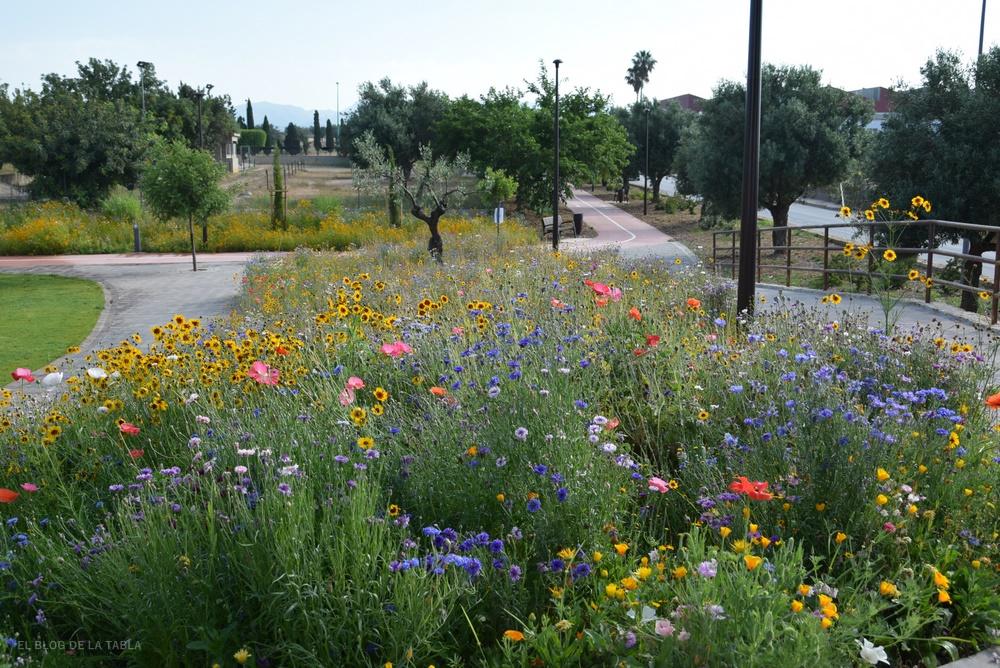 Praderas floridas flores silvestres
