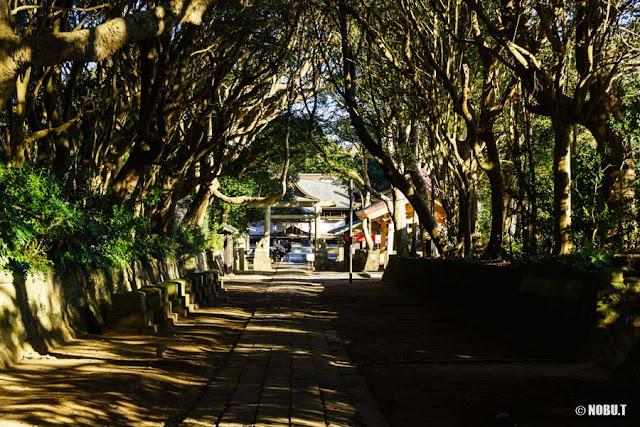 酒列磯前神社の樹叢と二の鳥居