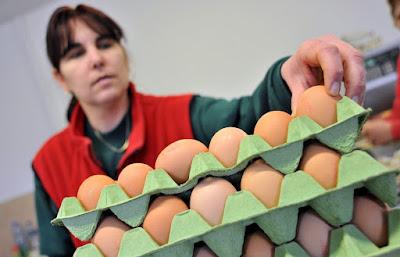 ételmérgezés, fertőzött tojás, Kovászna megye, szalmonella, tojás