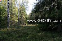 Forest crossrad in Puszcza Nalibocka