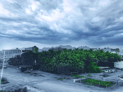 Palm trees in a cloudy day stock image