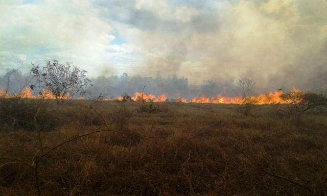 Conquista: Incêndio em vegetação que atingiu área da Uesb é debelado; fogo destruiu área de 80.000 m²