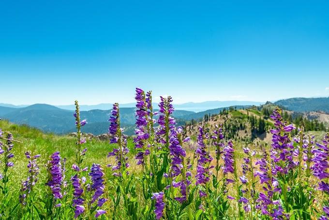 Valley of Flowers Trek | Uttarakhand