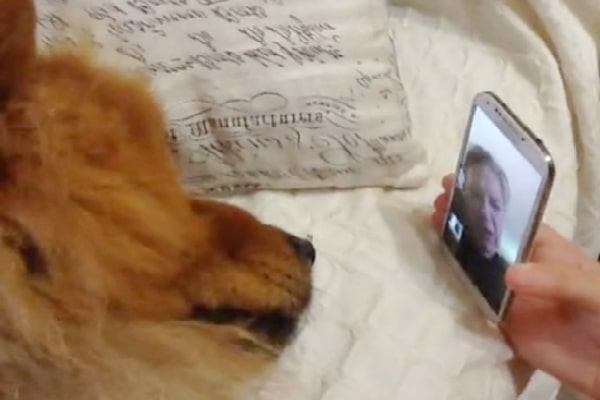 Granny Takes Place A Trip And Distressed Pet 'Pleads' On FaceTime To Come House