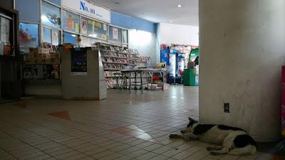 バンコクの野良犬