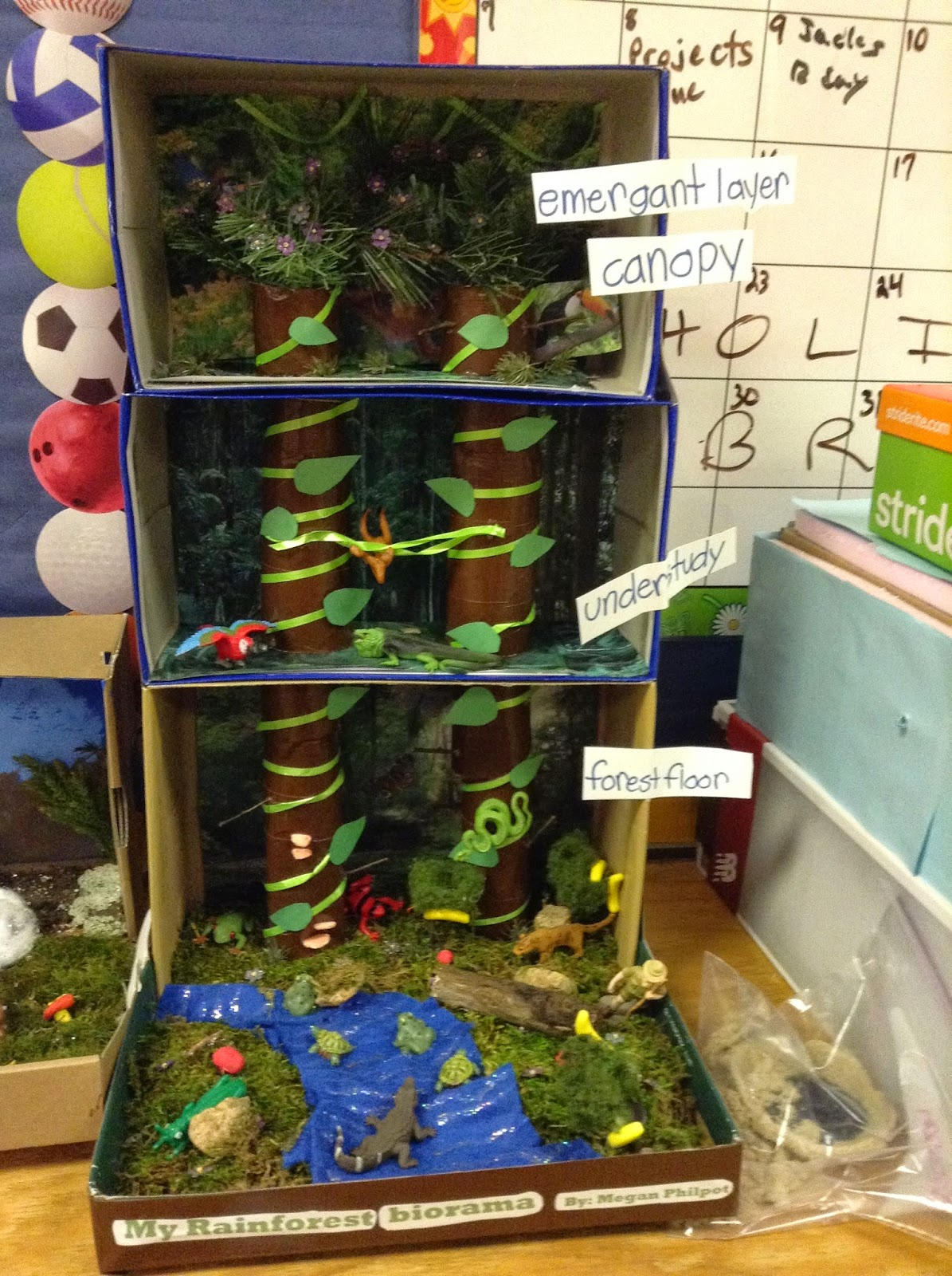 Tropical Rainforest Biome In A Box Shoes Wiring Diagrams Single Supply Bipolar Input Differential Output Amplifierblog Mrs Edge S Science Class Blog February 2017 Rh Edgehccms Blogspot Com