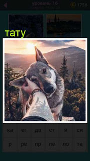 мужчина, рукой на которой имеется тату, гладит собаку по голове