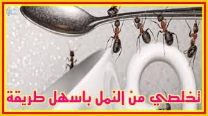 كيف نتعامل مع '' النمل ''للتخلص منه نهائياٌ في المنزل - ليالينا