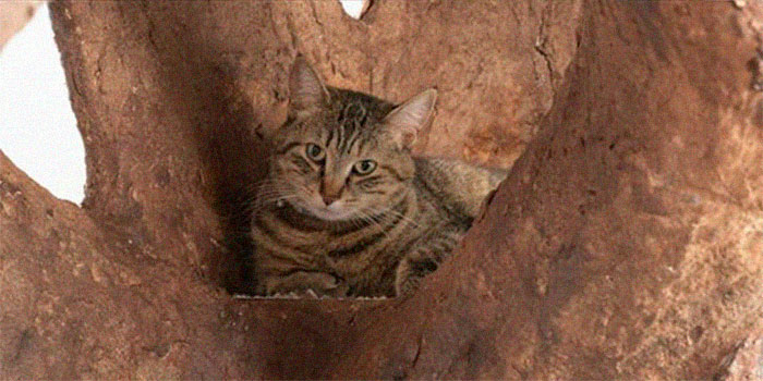 Indoor Tree Shelter For Cat – Another Great Work By Human