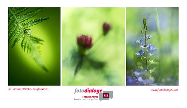 Kurs der Fotoschule Fotodialoge zur Makrofotografie im Schlosspark Dennenlohe