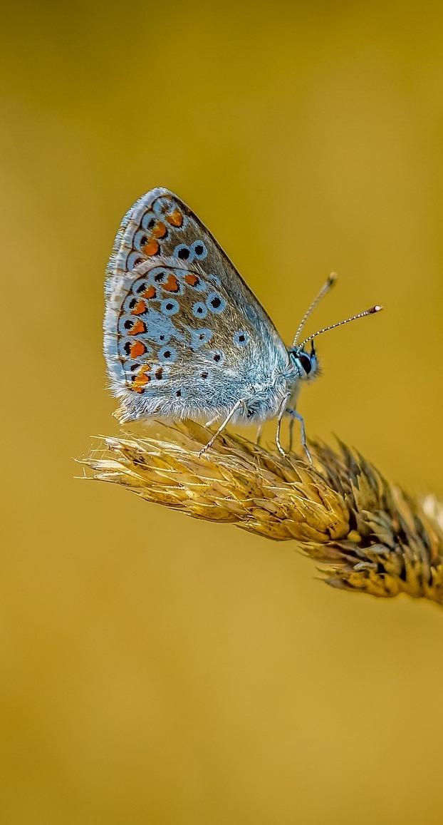 Butterfly beauty in miniature