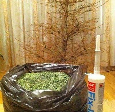 Enfin un sapin de Noël recyclable !