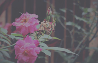 Tutorial Image Hover Dengan CSS Filter Effects