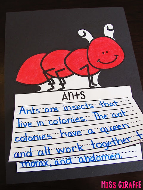 Ants writing craft that is NO PREP perfect for learning about insects in science in the springtime! Click for a ton of fun Spring activities and writing prompts!