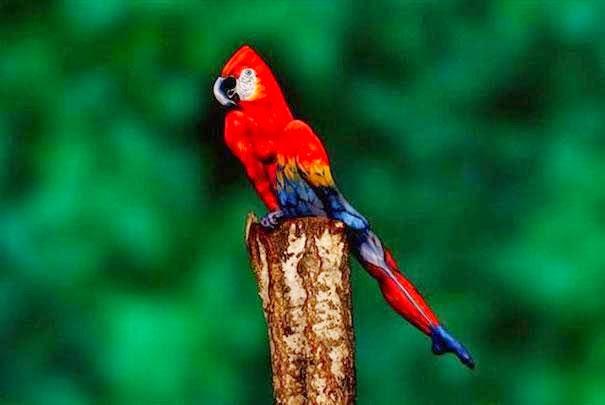 Kreatif !! Imej Burung Nuri Ini Sebenarnya Adalah Seorang Manusia