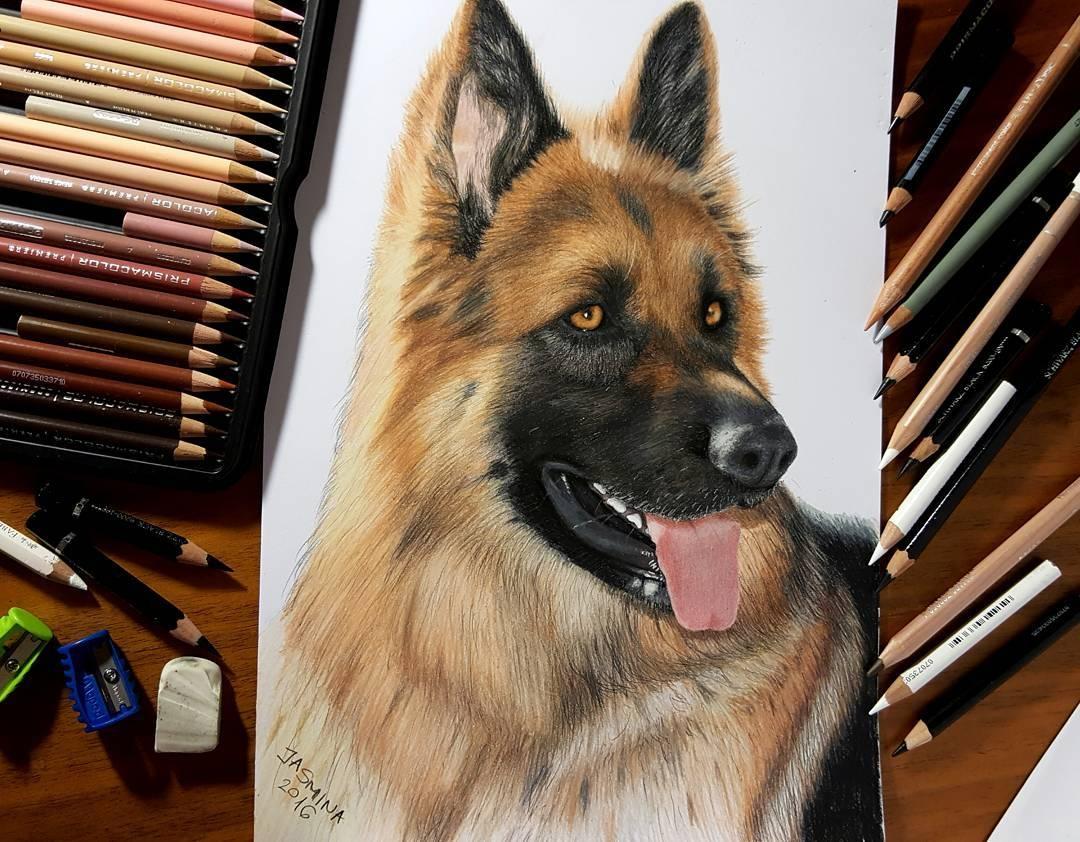 13-German-Shepherd-Jasmina-Susak-Realistic-Animal-Drawings-with-Colored-Pencils-www-designstack-co