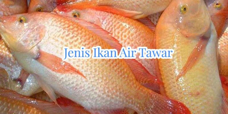 jenis ikan air tawar budidaya