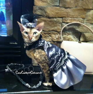 Coco, the Cornish Rex, in an elegant 1920's style ensemble