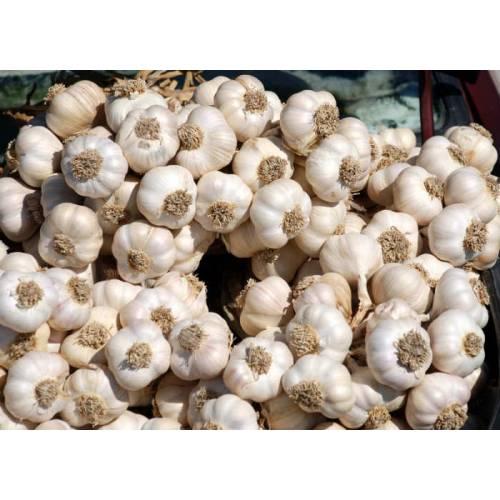 Taşköprü'de Tarım Ürünleri