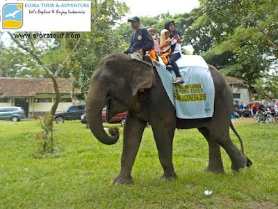 tour naik gajah