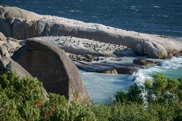 How to Swim with Penguins at Boulders Beach, Cape Town