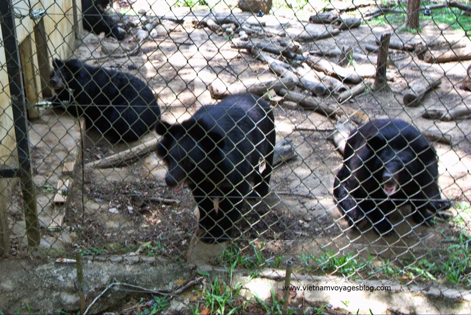 Những chú gấu trong hội bảo vệ động vật hoang dã WWF tại rừng quốc gia Nam Cát Tiên