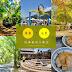 【南投集集水里車埕一日遊】綠色隧道追火車行程規畫,含8景點6間美食餐廳與季節節慶介紹