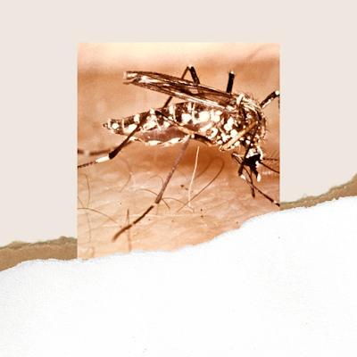 Obat gatal digigit nyamuk