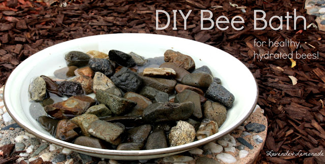 On a hot day, a hive of bees can use over a quart of water! Keep them healthy and hydrated with this DIY Bee Bath.