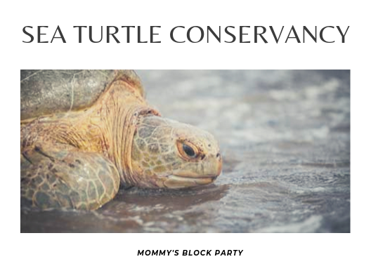 Adopt And Track An Adorable Sea Turtle With The Sea Turtle Conservancy #MBPHGG19