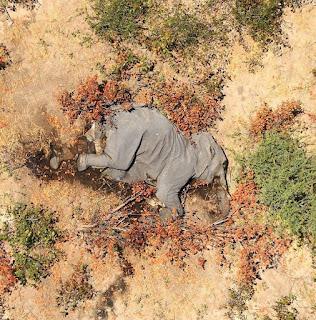 Over 350 Elephants Found Dead in Botswana