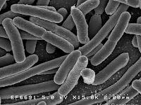 Peranan Bakteri dalam Kehidupan Manusia dan Makhluk Hidup Lainnya