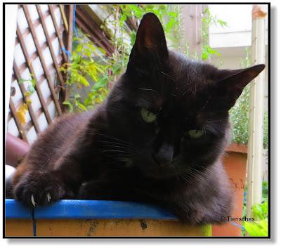 Katze Rambo im Garten