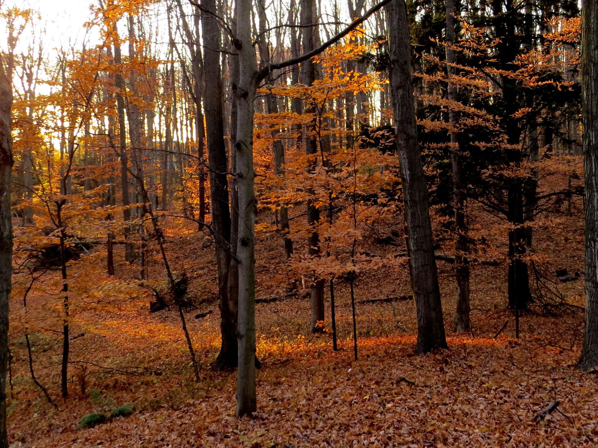 orange light in forest