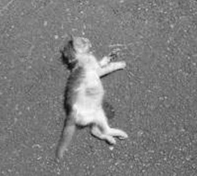Αποτέλεσμα εικόνας για agriniolike γατα