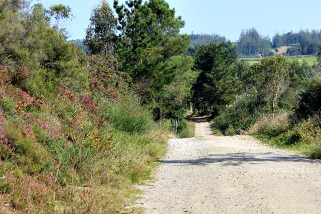 foto de senda en el camino