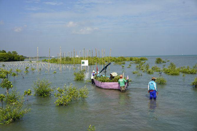 Perahu nelayan kandas saat membawa bibit pohon mangrove