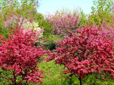 Spring the Reservoir Central Park